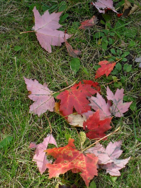 fall has arrived