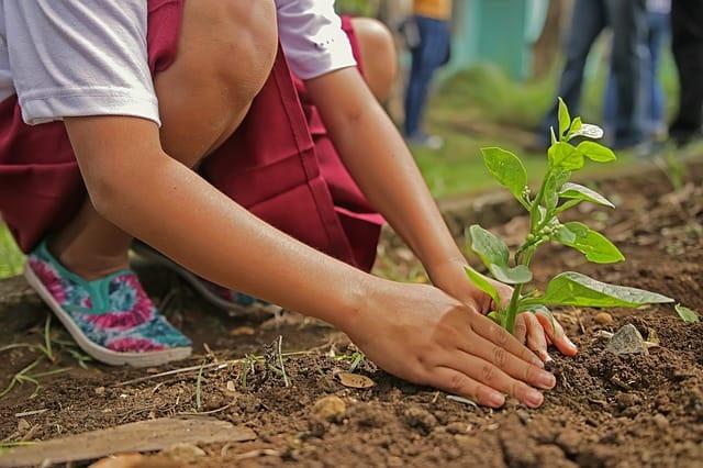 eco-gardening